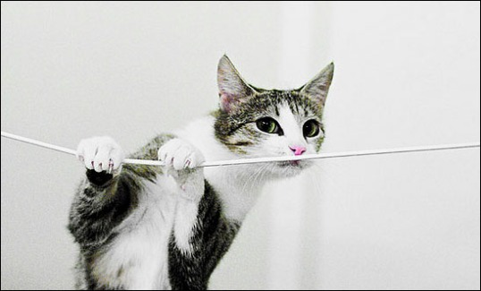 Cat measuring string