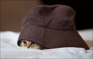 Not coming out!